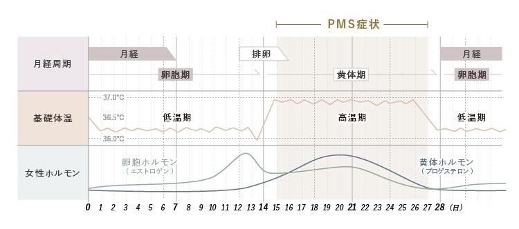 月経周期・基礎体温・女性ホルモンのグラフとPMS症状が起こる時期