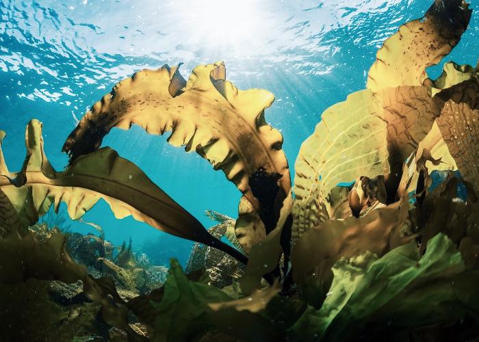 海藻由来の天然成分イメージ