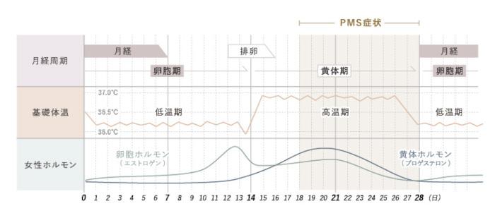 月経周期 基礎体温 女性ホルモンのグラフ