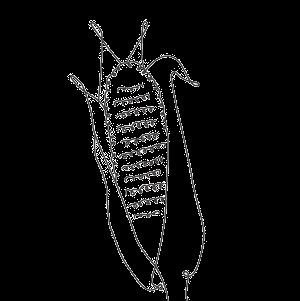 セラミドNP(ヒト型セラミド) 成分イメージイラスト